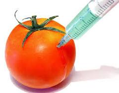 genetically modified organism (GMO)