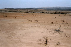 What are the consequences of desertification ?