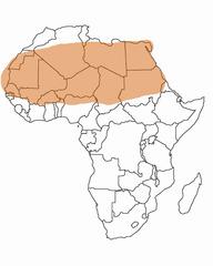Where is the Sahara Desert ?