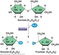 Biochemistry – Biology Flashcard - test, questions and